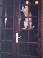 un chat sur une porte, perché...