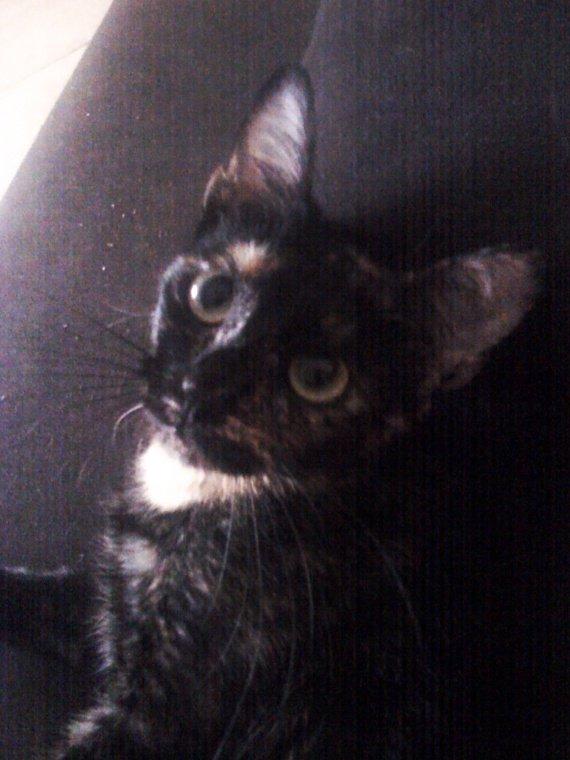 De vrais yeux de chat potté!
