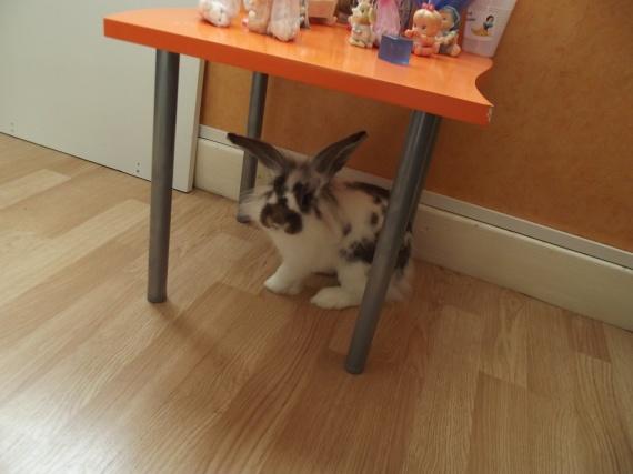 Sous la petite table...
