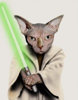 Chat Yoda dit: Que la foce soit avec toi