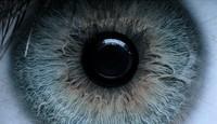 l'oeil ouvert