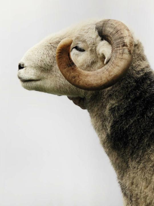 Prends ma laine - cela va me faire du bien