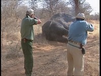 331059818-highlights1617-big-game-hunter-animal-cruelty-damaraland