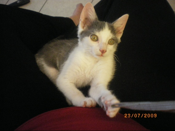 Enfants-chats 066