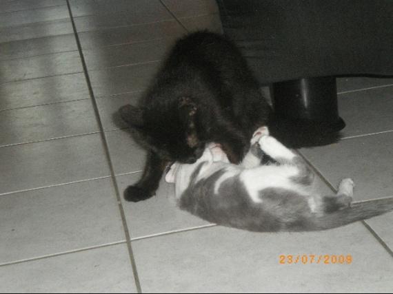 Enfants-chats 075