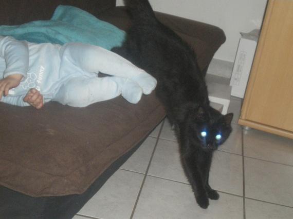 chat enfants 175