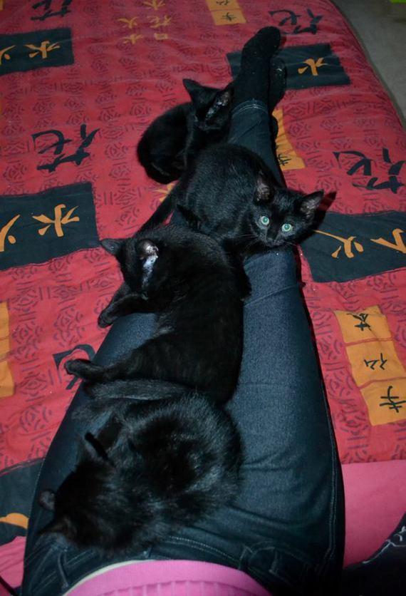 4 noireaux