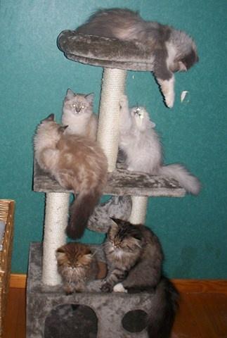 un arbre bien garni de chats!