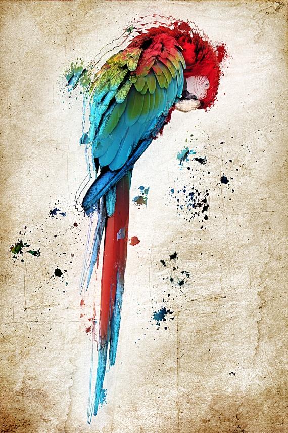 Perroquet par Utopie