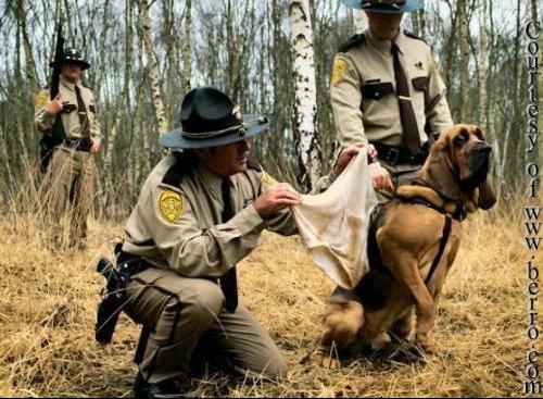 funny_police_dog_look_crime_scene