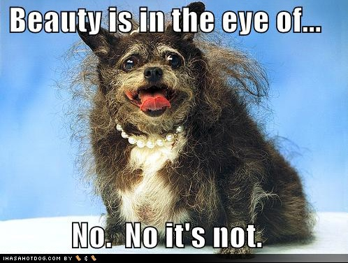 funny-dog-pictures-beauty-eye-beholder-not