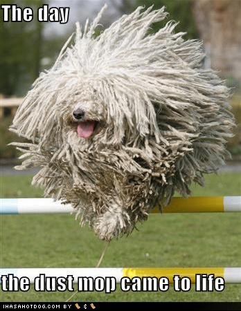 funny-dog-pictures-komondor-dust-mop