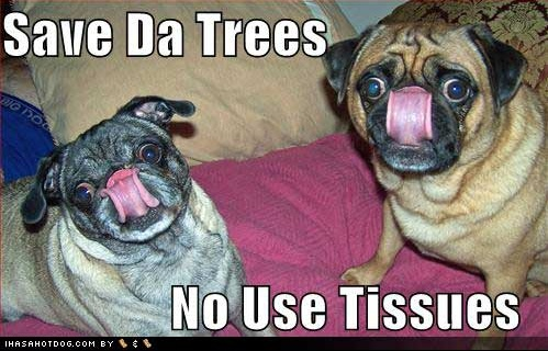funny-dog-pictures-lick-nose-no-tissues