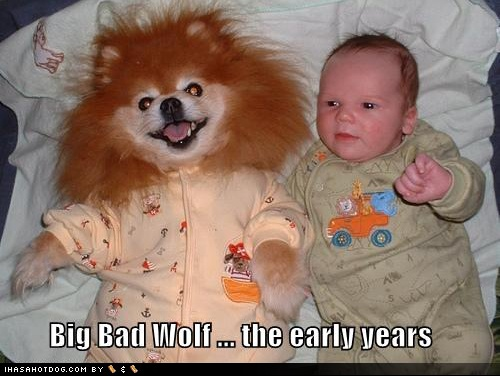 funny-dog-pictures-big-bad-wolf-early-years