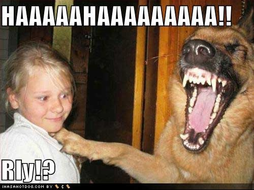 funny-dog-pictures-laughing-at-little-girl