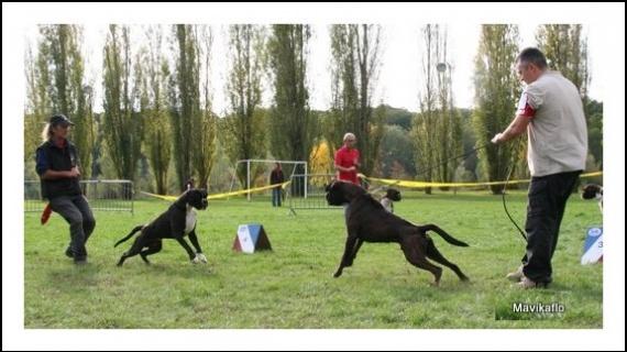 Laisse pour exposition canine - Chiens - FORUM Animaux