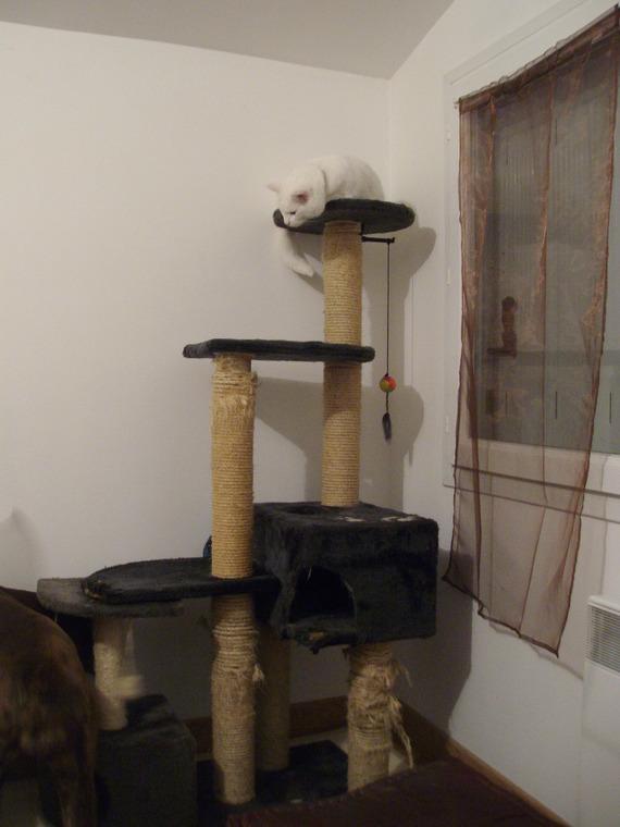Kyra et l'arbre à chat