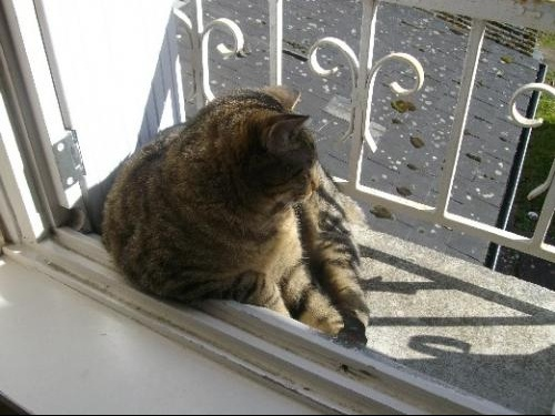 Mon chat est tombe du balcon chats forum animaux - Protection fenetre chat ...