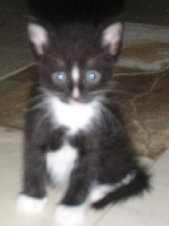 Ma toute première photo, le 30 octobre 2009 j'ai trois semaines