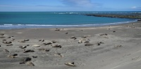 Peninsula Valdes, la plage