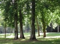 Chamarandes - Le parc