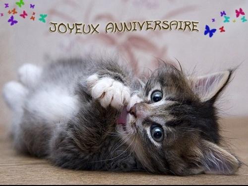 chat-anniversaire-1596140ad6
