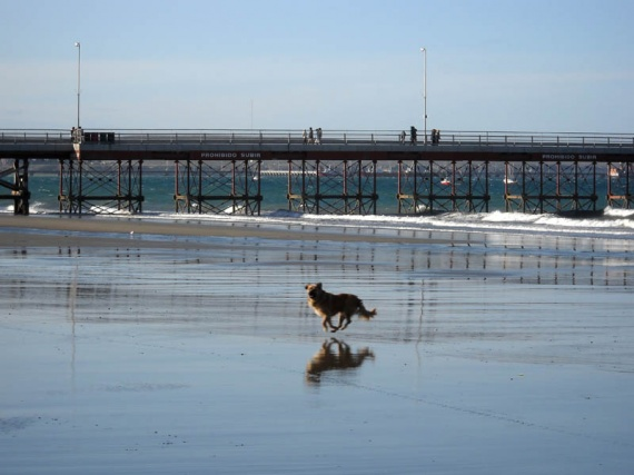 Puerto Madryn - Chien courant sur la plage