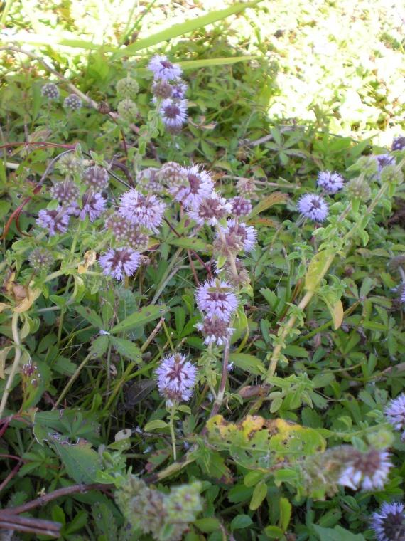Identification : pour aider une novice Fleurs-2011-dscn2351-img