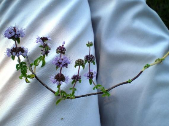 Identification : pour aider une novice Fleurs-2011-dscn2368-img