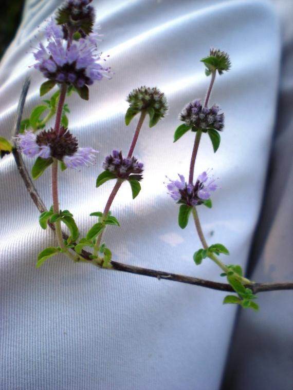 Identification : pour aider une novice Fleurs-2011-dscn2370-img