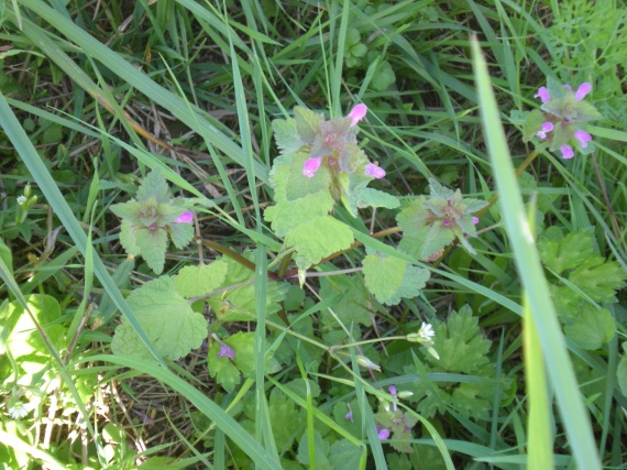 Identification : pour aider une novice Fleurs-2011-dscn2328-img