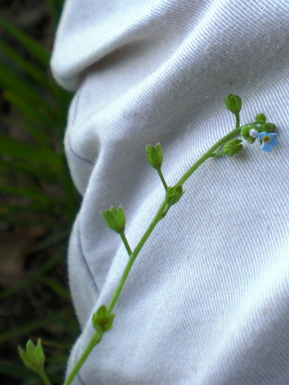 Identification : pour aider une novice Fleurs-2011-dscn2377-img
