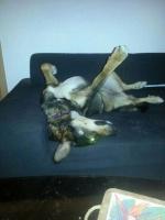 tres dure la vie de chien