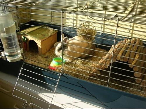 cage id al pour lapins hamsters cochons d 39 inde lapins. Black Bedroom Furniture Sets. Home Design Ideas