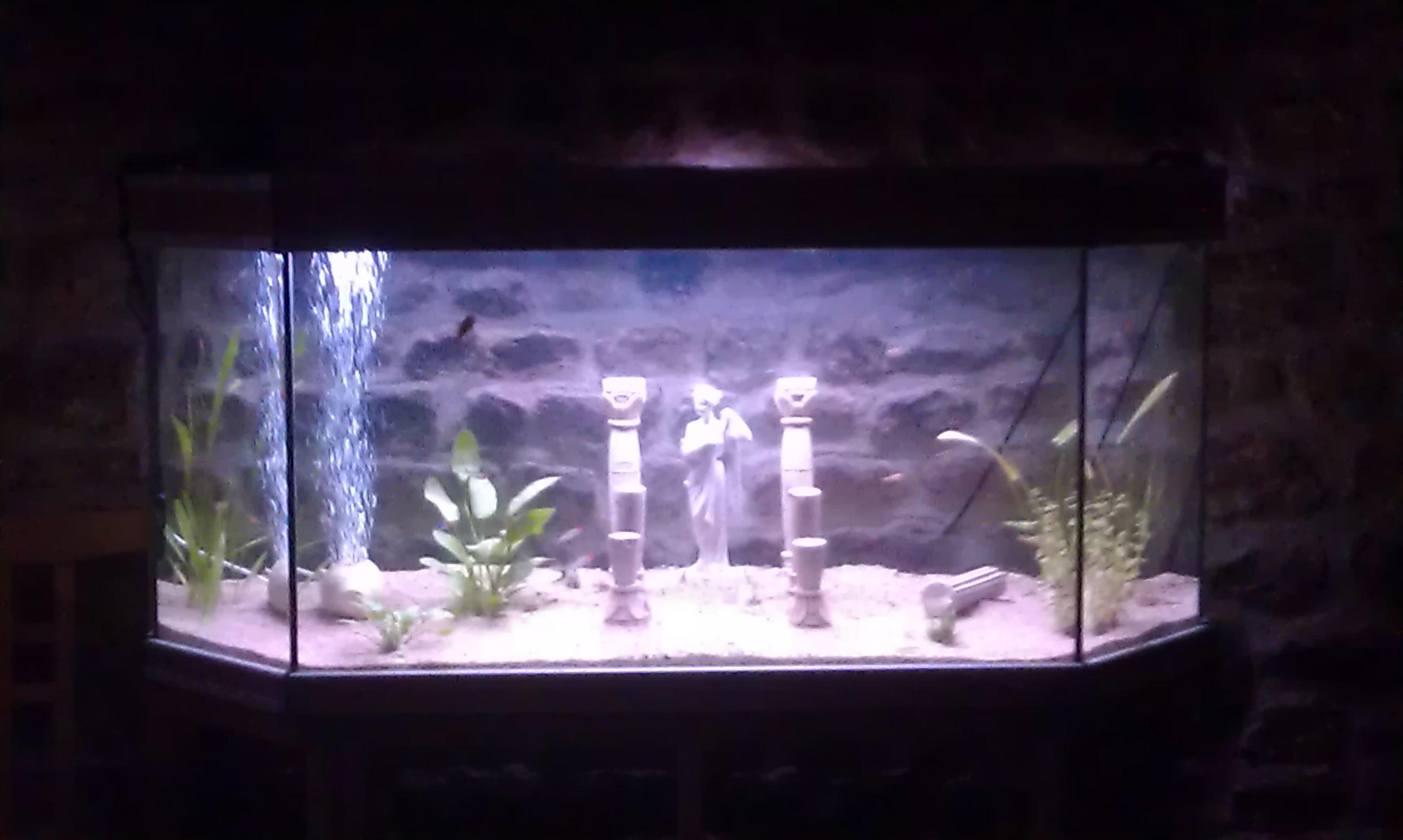 big-20154421a48 Frais De Aquarium Avec Meuble Schème