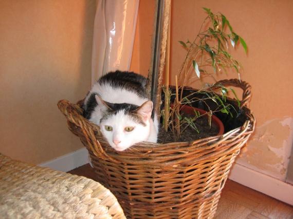 nouvelle plante