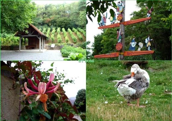 Colline aux oiseaux( 1 montage photos)