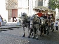 Calèche à côté de la cathédrale