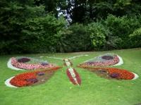 Papillon du jardin des plantes