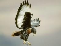 2df75147db9ae11d10b5cfdd0b853bd6--eagle-wallpaper-animal-wallpaper