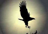 aigles_014