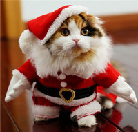cat-cute-happy-holidays-kitten-Favim-com-3865796