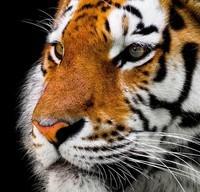 animal-2923186_960_720
