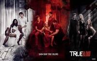 True_Blood-American_TV_series_Wallpaper_21_2560x1600
