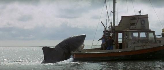 Requin attaque bateau