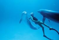 Jacques-Mayol-etait-connuses-plongees-inspirees-dauphinscomme-Bahamas-1994_0_729_492