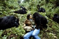 Gorilles dans la brume (1)