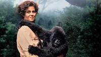Gorilles dans la brume (5)