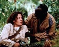 Gorilles dans la brume (11)