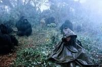 Gorilles dans la brume (14)
